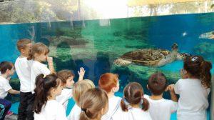 EI_palma aquarium 5