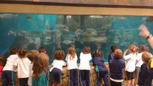 EI_palma aquarium 8
